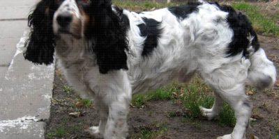 Команда спасения помогла собаке вернуться домой