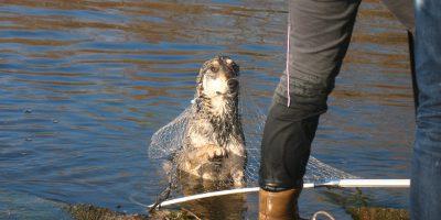 Спасение собаки с острова