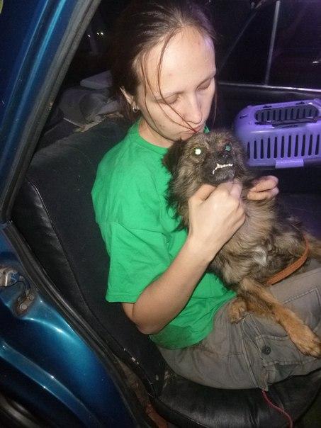 Извлечение собаки из трубы теплотрассы