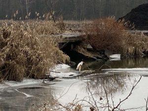 цапля на реке